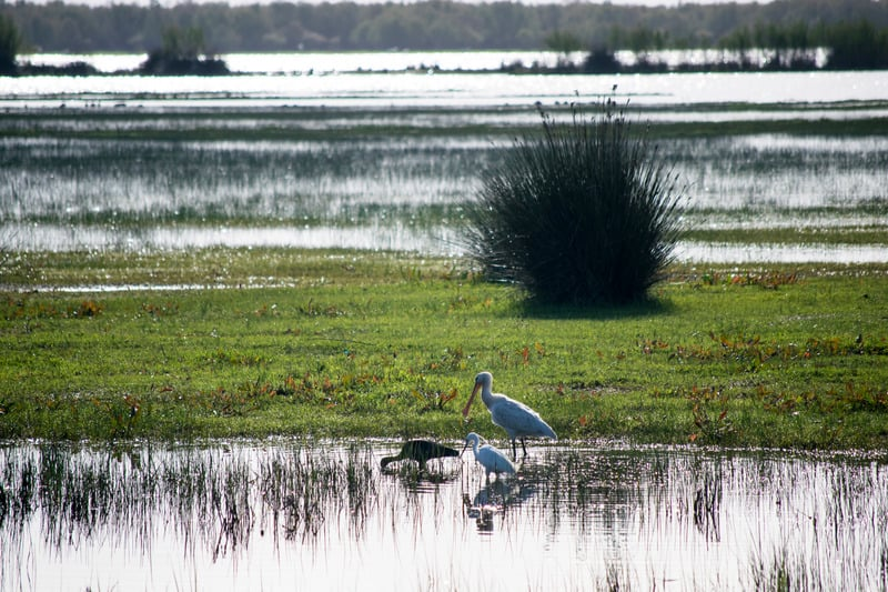 3 day itinerary Cadiz, Doñana National Park