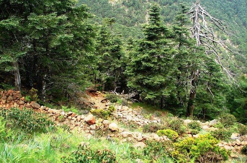 Estepona 3 day itinerary, Los Reales de Sierra Bermeja