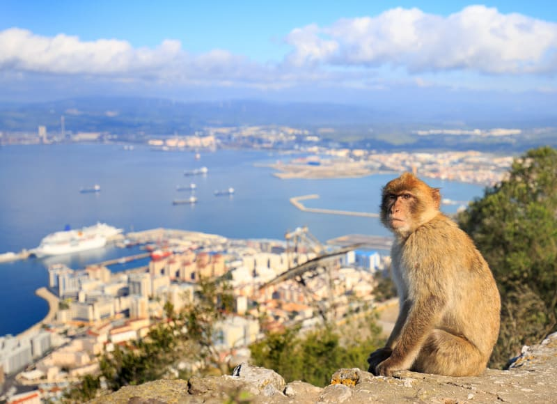 Gibraltar itinerary, Take pictures with the Apes
