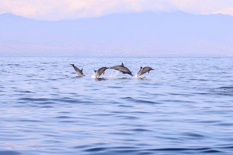 Gibraltar itinerary, Dolphin Safari