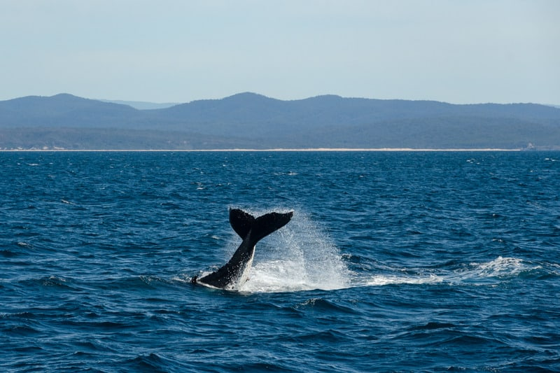 3 day itinerary Tarifa, Go whale-watching