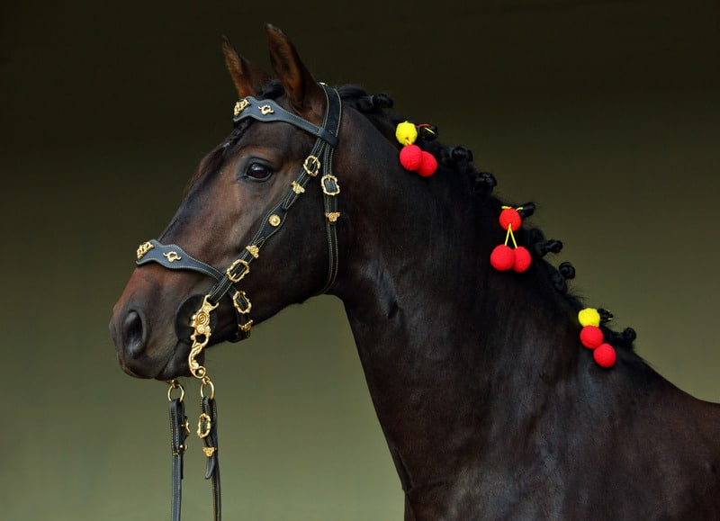 Andalusian-School-of-Equestrian-Art, Andalusian bay horse in dark stable