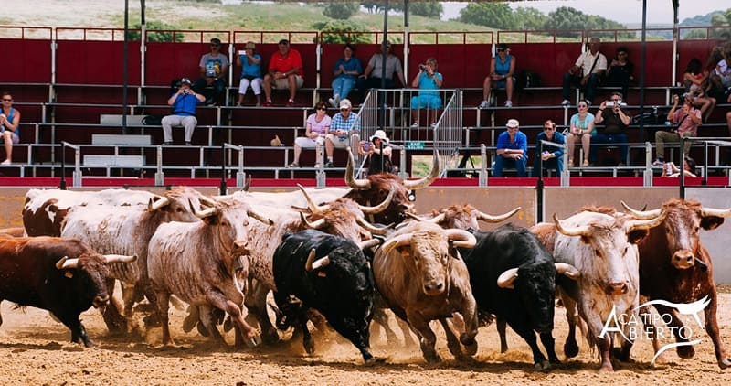 jerez guide, Attend a bull country show