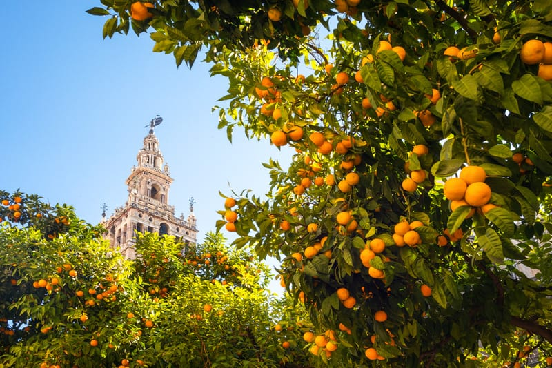 things to do in andalusia, seville tower