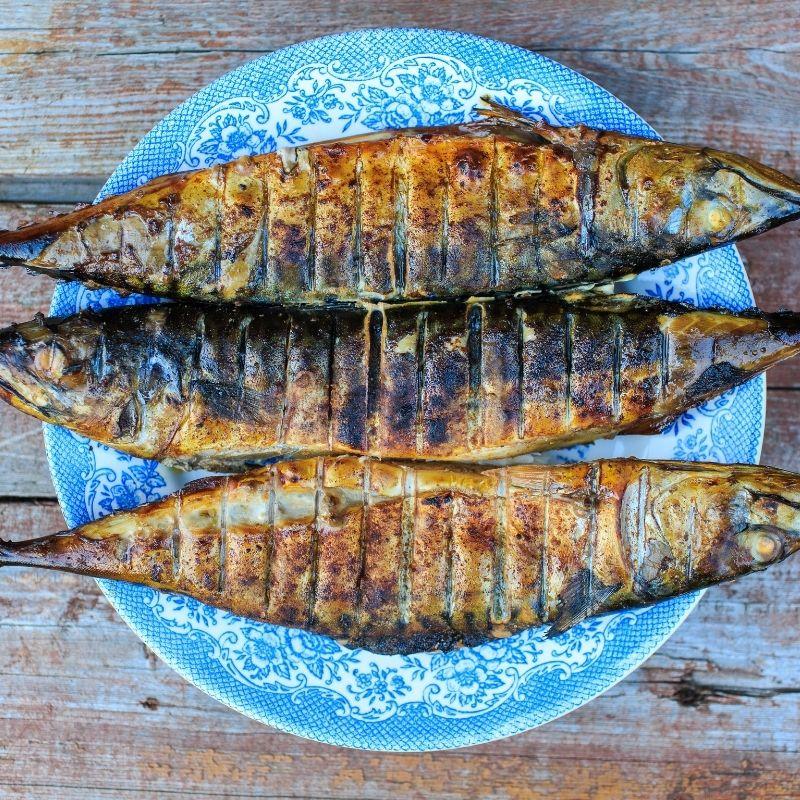 grilled spanish mackerel recipe