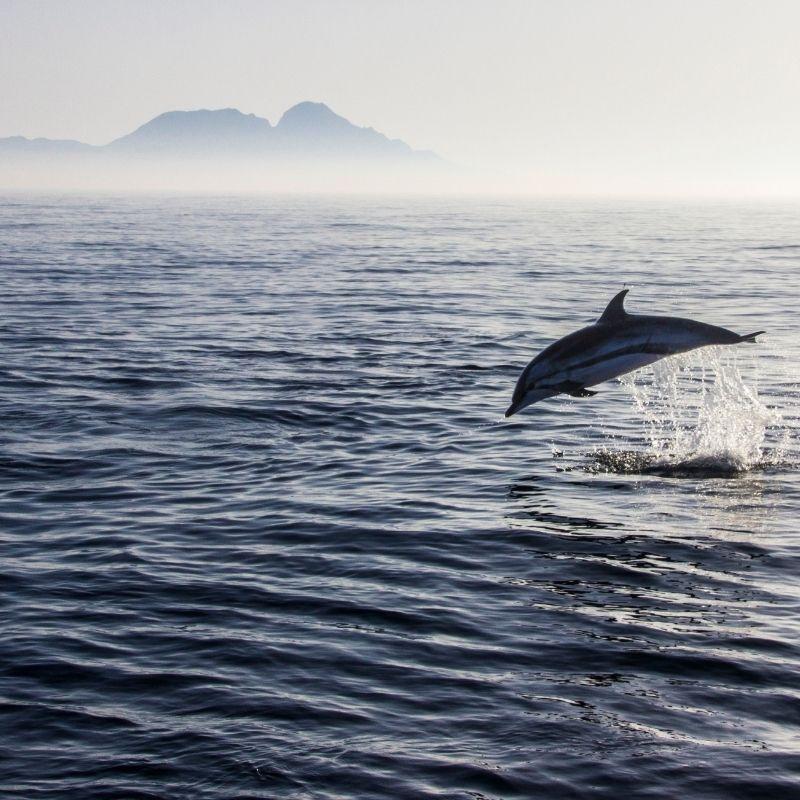 Best watersports in Malaga, Benalmadena: Dolphin Watching Boat Tour
